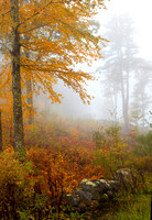 Misty Autumn Morning, Marlborough, New Hampshire