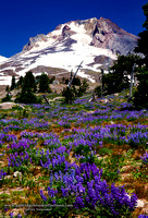 Mount Hood, Oregon, Timberline Lodge