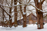 NH Maple Shacks - Winter